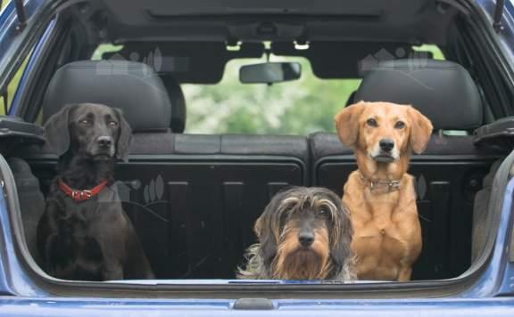 Ferienhäuser für Hunde geeignet